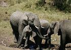 Pozwał biuro podróży, bo nie widział słonia