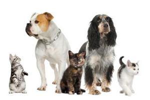 Przenoszenie chor�b przez zwierz�ta domowe