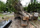 Sterty gałęzi, połamane konary. Nadal widać skutki wichury