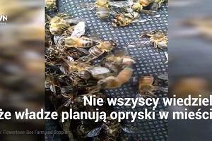 Przez ludzki błąd zginęły miliony pszczół