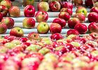 Dieta jabłkowa - odchudza, oczyszcza organizm i poprawia samopoczucie