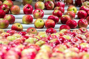 Ukraina zajada si� jab�kami z Polski. Eksport wzr�s� sze�ciokrotnie, jednak rosyjskie embargo wci�� uci��liwe