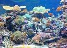 Naukowcy alarmują: ponad jedna trzecia Wielkiej Rafy Koralowej bieleje i umiera