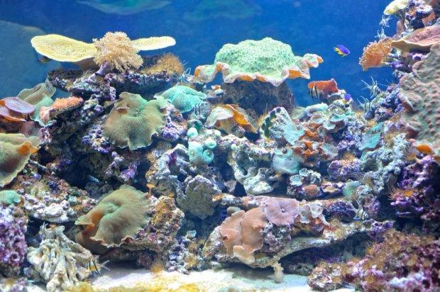Naukowcy alarmuj�: ponad jedna trzecia Wielkiej Rafy Koralowej bieleje i umiera
