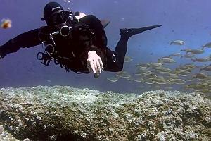 Oto najbardziej uspokajające rybki w polskim internecie. Czy to wideo ma realne szanse na Oskara?