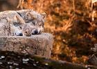 Polska jesienno-zimow� por�: Podgl�damy dzik� przyrod� w Polsce