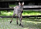 W �l�skim zoo pojawili si� nowi lokatorzy [ZDJ�CIA]