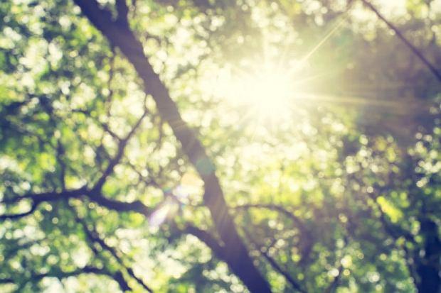 Prawda czy mit: błysk światła wywołuje kichanie?