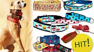 Modne akcesoria dla psów - Collars Craft Studio