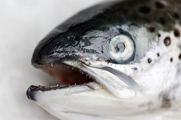 Ryby są bogatym źródłem kwasów omega-3