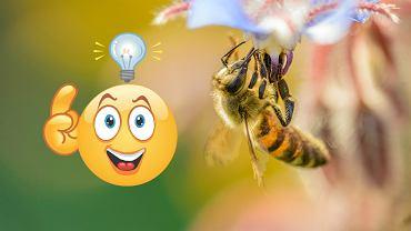 Ugryzła cię pszczoła? Oto domowe sposoby na uśmierzenie bólu