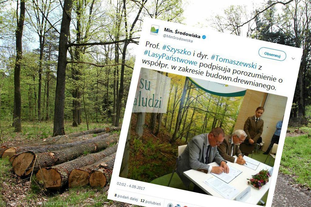 Lasy Państwowe chcą budować drewniane domy na wynajem