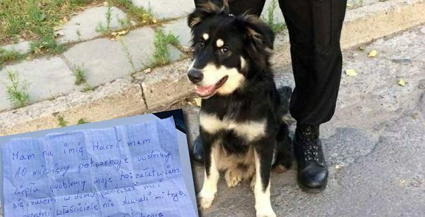 Do porzuconego psa była dołączona karteczka