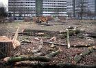 """Katowice miastem wielkiej wycinki drzew. """"Jesteśmy zasypani wnioskami"""""""