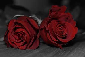 Mężczyzna z Chełma zabił żonę, a na jej ciele położył 19 róż. Nie bez przyczyny jedna z nich była czerwona