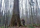 To zadziwiające, jak bardzo nie rozumiemy i nie szanujemy drzew. A przecież bez nich nie przetrwamy