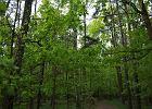 """PiS chce nacjonalizować lasy. Ochrona przed """"wycięciem i obcymi"""""""