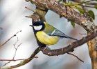Ptaki znad Wis�y �piewaj� w smartfonie. Jest na to apka