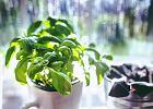 Chcesz założyć własny ogródek na parapecie lub balkonie?