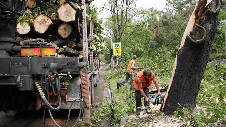 Usuwanie powalonych przez wichury drzew, Klucze k. Olkusza