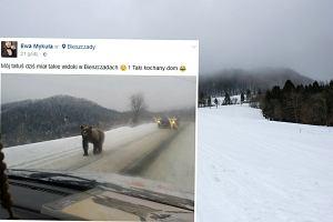 """Niedźwiedź, który przechadzał się drogą w Bieszczadach, uratowany. """"Za wcześnie wybudził się ze snu"""""""