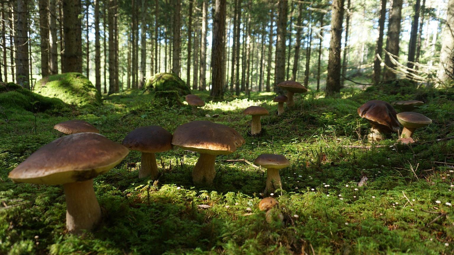 W Polsce występuje co najmniej dwadzieścia grzybów, w których nazwie jest słowo 'borowik'
