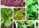Sałata - zielona moc witamin
