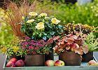 Szkodniki w ogrodzie: mszyce, �limaki, gryzonie, jak si� ich pozby�?