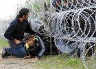 Węgry: Zakończono pierwszy etap budowy ogrodzenia na granicy z Serbią. Uchodźców to nie powstrzymuje