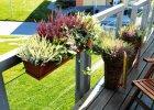 Supermodny jesienny balkon: nimi zast�pisz pelargonie i surfinie