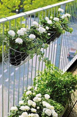 Kwiaty Balkonowe BiaŁe Projektowanie Pielęgnacja