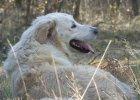 My�liwy bez powodu zastrzeli� psa. Zwi�zek �owiecki nawet go nie zawiesi�