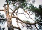 Mamy 250-letnie drzewo, cenne storczyki i staw na szczupaka