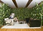 Jakie rośliny oczyszczą powietrze w domu? Czy zwalczą smog?