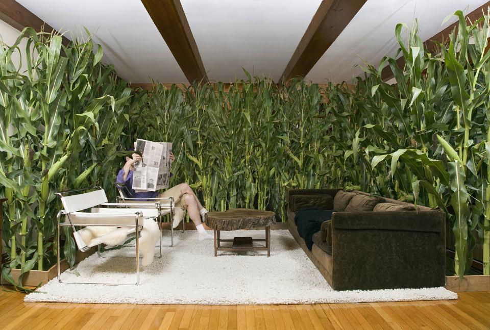 Jakie Rośliny Oczyszczą Powietrze W Domu Czy Zwalczą Smog