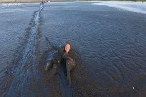 Godzinę czołgał się przez bagno, żeby uratować bielika. Niesamowita akcja sfilmowana dronem
