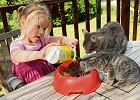 Nie dawaj kotu jedzenia z lodówki ani psiej karmy. Nie dziw się, że grymasi