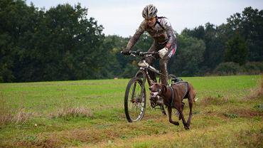 Igor Tracz ze swoim psem Ozzim zdobyli mistrzostwo Europy w Bikejoringu w kategorii DBM