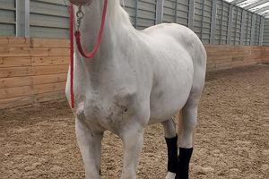 Przynieś makulaturę, pomóż ratować konie. Co roku kilkadziesiąt tysięcy wysyłamy na rzeź