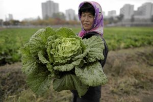 Cicha rewolucja rolna w Korei P�nocnej