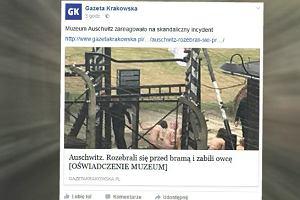 Skandaliczny incydent. Zabili owcę, rozebrali się do naga i skuli łańcuchem przy bramie Auschwitz