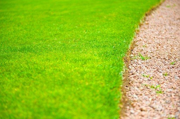Kiedy przeprowadzi� aeracje i wertykulacj� trawnika?