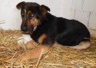 Facebookowy fenomen: p� Cz�stochowy szuka psa Oresta