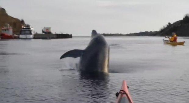 Delfiny w Ba�tyku zaobserwowane niedaleko Karlskrony. Kajakarze nagrali film z tymi ssakami [WIDEO]