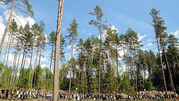 Demonstracja przeciwników wycinki puszczy Białowieskiej, 26 maja 2017