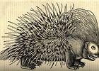 'Stare obrazki ze zwierzętami'. Dlaczego internet je kocha? [ROZMOWA]