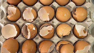 Wykorzystać można również skorupki z jajek - będą np. świetnym domowym nawozem do roślin doniczkowych