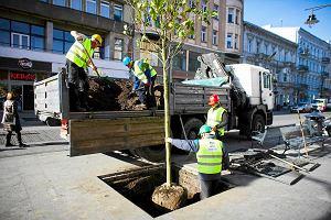 Drzewa w Łodzi będą miały lepiej? Nowa technologia ratunkiem