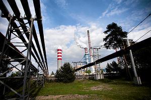 Mazut z elektrowni nadal w Wiśle. Znaleźli oblepione pisklę