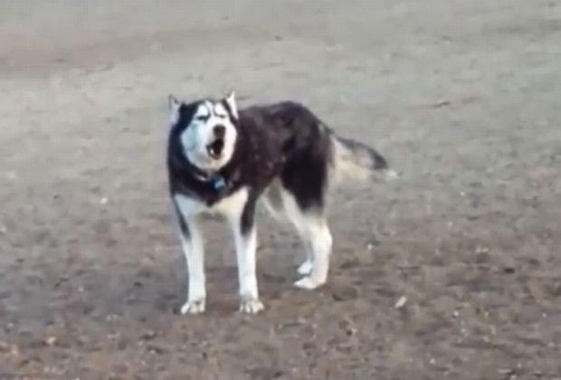 Posz�a z psem do parku i wszystko sz�o po jej my�li. Ale gdy mieli wraca�, on...